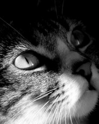 Up-Close-With-A-Cat-cats-37245625-1920-1080